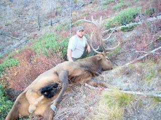 Trophy Bull Elk - Idaho Wilderness Company- Frank Church River of No Return Wilderness - Idaho Units 20A, 26 and 27