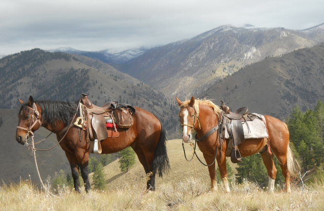 Horses wait while hunting in Idaho Frank Church Wilderness Idaho Units 20A 26 and 27. Idaho Wilderness Company Outfitter Steve Zellel
