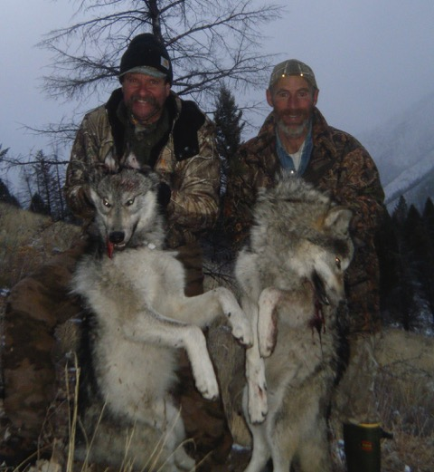 Guided Wolf & Bear Hunting Camp on Big Creek in the Idaho Wilderness